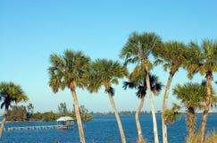 De Palmen van Riverfront Stock Afbeeldingen