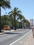De Palmen van San Francisco Royalty-vrije Stock Afbeeldingen
