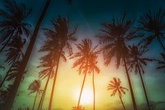 De palmen van de silhouetkokosnoot op strand bij zonsondergang Stock Foto's