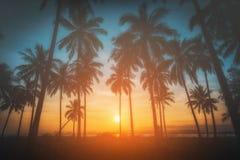 De palmen van de silhouetkokosnoot op strand bij zonsondergang Stock Foto
