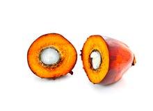 De palmfruit van de besnoeiingsolie  Royalty-vrije Stock Afbeeldingen