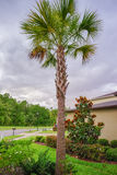 De palmgemeenschap van Tamper Stock Afbeeldingen