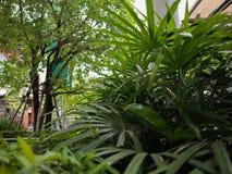 In de palmtuin is er erachter een grote boom royalty-vrije stock afbeeldingen