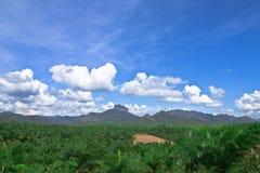 De palmtuin van de olie in Zuiden van Thailand. Stock Foto's