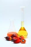 De palmvruchten van de olie met palmolie Stock Foto's