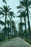 De palmweg van Majorca stock foto's