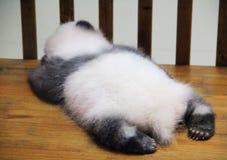 De panda van de slaapbaby stock foto