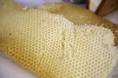 De panelen van de bijenhoning royalty-vrije stock afbeelding