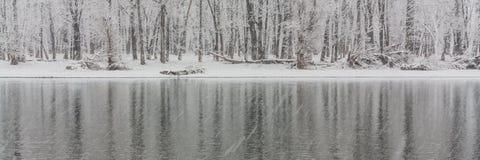 De panoramische Ijzige Bezinningen van de de Winterboom Stock Foto's