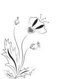 De papaver met knoppen en bladeren. Royalty-vrije Stock Afbeeldingen