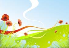 De papaver van de lente Stock Afbeelding