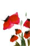 De papaverbloemen van de waterverf Stock Afbeeldingen