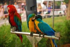 De papegaai Royalty-vrije Stock Fotografie