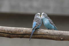 De papegaai Royalty-vrije Stock Foto