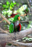 De papegaai Royalty-vrije Stock Afbeelding