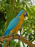 De papegaai van aronskelken Stock Afbeeldingen