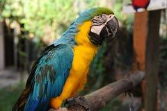 De papegaai van de vogel Royalty-vrije Stock Foto