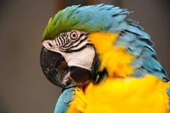 De papegaai van de vogel Royalty-vrije Stock Afbeeldingen