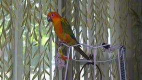 De papegaai zit en holding een potlood stock video