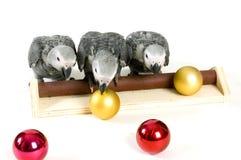 De papegaaien die van de baby met Kerstmisballen spelen Royalty-vrije Stock Afbeelding