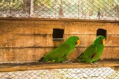 De papegaaien of psittacines zijn vogels in het meest tropisch worden gevonden die royalty-vrije stock fotografie
