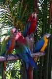 De papegaaien van de ara Stock Fotografie