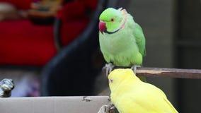 De papegaaien zitten op het karton stock video