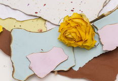 De papel rasgado com bordas carbonizadas e uma rosa amarela Fotos de Stock