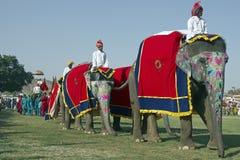De Parade van de olifant Stock Foto