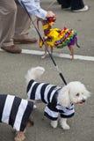 De Parade van het Huisdier van Howl'oween & Huisdier Faire Stock Afbeelding