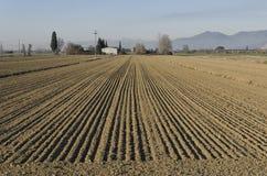 De parallella linjerna av den italienska aktionen Arkivfoto