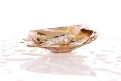 De Parel van de oester stock foto