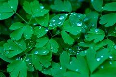 De parels van het water op groen doorbladert stock foto's