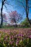 De parken en de tuinen van Boekarest - Tineretului-Park stock foto