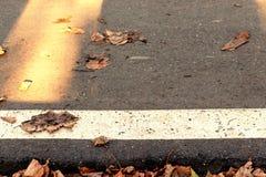 De partij van de asfaltweg met een witte strook van wegnoteringen en de droge herfst gaat weg stock fotografie
