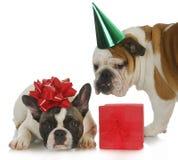 De partij van het puppy Royalty-vrije Stock Foto