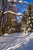 De pas van de winter Stock Foto's