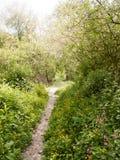 de passagetrek van het de lentevoetpad sleep door bosjeweide wildflow Stock Fotografie