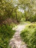 de passagetrek van het de lentevoetpad sleep door bosjeweide wildflow Royalty-vrije Stock Fotografie