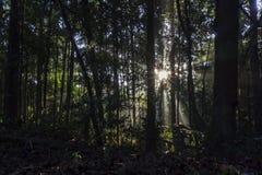 De passen van de ochtendzonsopgang door het bos stock fotografie