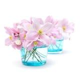 De pastelkleur van de lente stock foto's