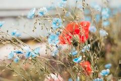 De pastelkleurbloemen van de de zomerweide royalty-vrije stock afbeelding