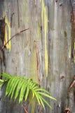De Pastelkleuren van de boomschors stock fotografie