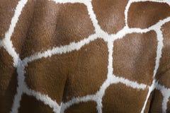 De Patronen van de giraf Stock Afbeeldingen