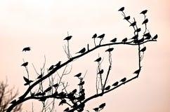 De Patronen van de vogel Stock Foto's