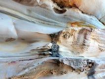 De Patronen van het honingraatzandsteen, Bondi-Strand, Australië Stock Afbeeldingen