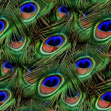 De pauw bevedert Naadloze Textuurtegel royalty-vrije stock afbeeldingen