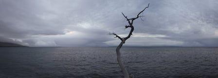 De Peacfullkust streek gevallen boom op oceaan overzeese oever met neer royalty-vrije stock afbeelding