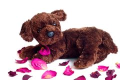 De Pedalen van het puppy Royalty-vrije Stock Afbeeldingen