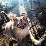 de peinzende kat stelt zijn leven tevreden Royalty-vrije Stock Afbeeldingen